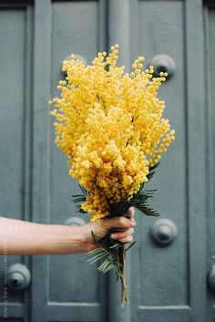 Yellow mimosa flower for a wedding bouquet ? Desert Flowers, My Flower, Yellow Flowers, Beautiful Flowers, Spring Flowers, Yellow Plants, Yellow Wildflowers, Yellow Bouquets, Spring Tree