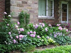 hostas and hydrangeas...want to put on our east wall