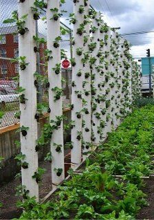 """Strawberry vertical gardening. Drainage pipe (or 6"""" PVC pipe with 2.5"""" drilled holes, spaced around pipe). 1"""" pipe with .5"""" holes every 2"""" inserted down the center for watering. Add soil to first hole, insert strawberry plant, fill to next hole. Water down the center pipe. Mount vertically either by hanging (holes at the top and rope) or pipe strapping and existing structure."""