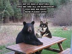 Dog + Bear