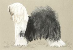 Avril Stege (British, 20th century) A portrait of a an Old English Sheepdog 14 x 20 1/2in. (35.5 x 51cm.)