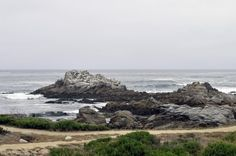 Bird Rock - Several birds have made a rock in the Monterey Bay, California their resting place