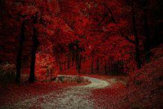 Herfst in het rode, mysterieuze bos.