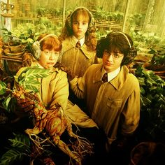 Harry, Ron and Hermione at Herbology Class, love this picture!
