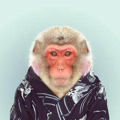 Yago Partal, Zoo Portrait : Macaca Fuscata