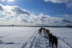 Faire du chien de traineau au Canada... un rêve de gamin devenu réalité !