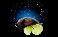 Turtle Constellation Light!
