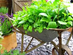 There's just something about using a wheelbarrow for a garden...