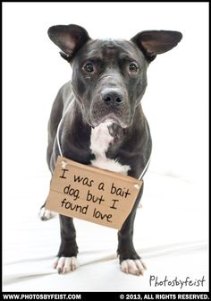 "A pit bull dog wears a sign, ""I was a bait dog, now I found love."" Amazing how much love these dogs still have to give!"