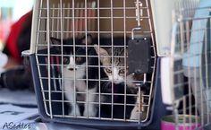 Gatitos pendientes de un perrillo que pasaba, muy majicos.