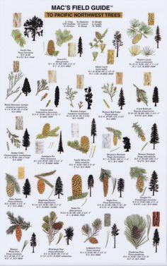 Northwest Trees - Mac's Field Guide - Waggoner Cruising Guide