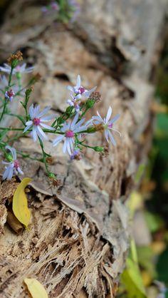 Fall Flowers | photo by Naomi Larocque | www.fashionismyreligion.ca