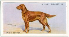 Dog Artwork, Collector Cards, Irish Setter, New York Public Library, Book Of Shadows, Color Card, Vintage Colors, The Originals, Digital