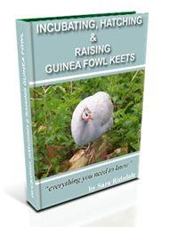 Incubating, Hatching & Raising Guinea Fowl Keets An eBook