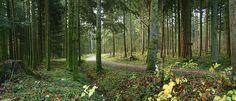 """Leichter Spaziergang vom Tierpark in Langenthal zum 2 km entfernten Waldweiher """"Aspisee"""". Der Weg führt mehrheitlich durch einen idyllischen Wald auf fester Naturstrasse."""
