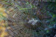 Résultats Google Recherche d'images correspondant à http://www.dinosoria.com/insectes/toile_araignee_ld02.jpg