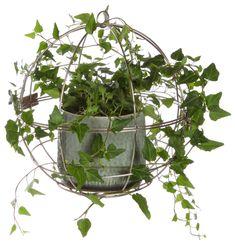 blomsterlandet-vaxtklot-299-kr Stark, Green, Plants, House, Home, Plant, Homes, Planets, Houses