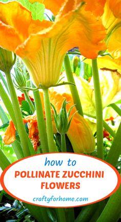Zucchini Plants, Zucchini Flowers, Backyard Vegetable Gardens, Garden Pots, Herb Garden, Garden Ideas, Growing Greens, Growing Flowers, Organic Gardening