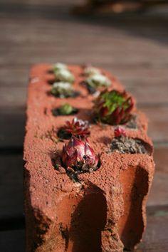 Succulents in brick holes.