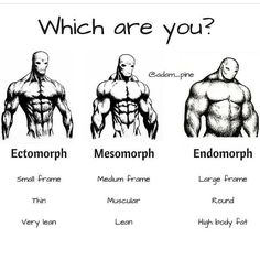 Interesting post from @adam_pine breaking down the 3 different body types.  Some say that there are actually mixtures of these and people don't always fall totally into one of these categories.....what do you think?  Which type do you think you fit into most? Fitness Workouts, Gym Workout Tips, Fitness Tips, Exercise Workouts, Mens Body Types, Ectomorph Workout, Muscle Fitness, Build Muscle, Gain Muscle
