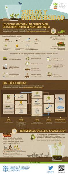 Suelos y Biodiversidad