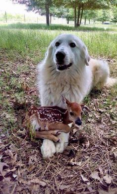 Funny Dog Memes, Funny Animal Memes, Funny Animal Pictures, Cute Funny Animals, Cute Baby Animals, Funny Cute, Funny Dogs, Animals And Pets, Cute Pictures