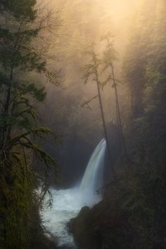 Forest Dreams by Majeed Badizadegan on 500px