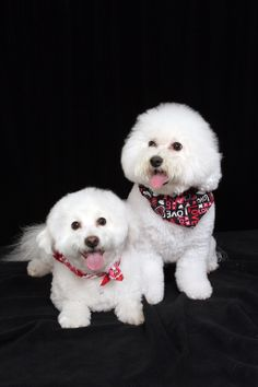Joey and Bella - dressed up for Valentine's Day