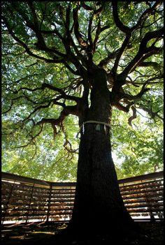 Kami Tree