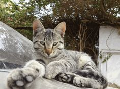Goshu says : 'no pic !'