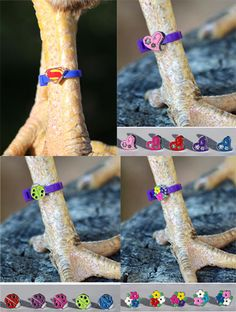 Chicken Charm Poultry Leg Bands - Free Shipping