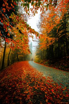 Photograph Autumn by HASAN HÜSEYİN AVUÇTEKİN on 500px