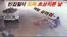 빈집털이 도둑 개한테 개털린 순간 Angry dog thieves attack