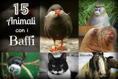 15 simpatici animali con i baffi (FOTO) Che stile! http://www.greenme.it/spazi-verdi/ethicme/1449