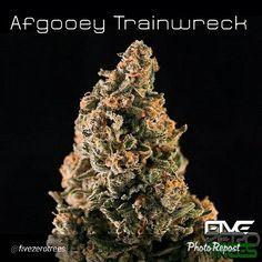 Afgooey trainwreck Buy Cannabis Online, Buy Weed Online, Weed Strains, Cbd Oil For Sale, Marijuana Plants, Mary J, Hemp Oil, Medical Marijuana, Weed