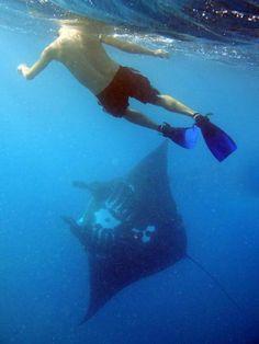 Barefoot Island | Reef Safari Diving