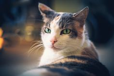 That Cat Look
