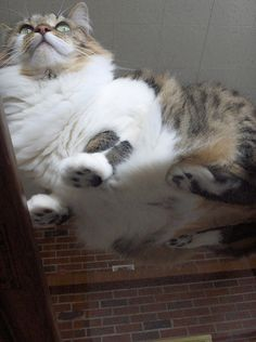 21 Pictures Of Cats On Glass