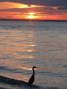 A beautiful sunset on Sanibel Island | by VISIT FLORIDA, via Flickr