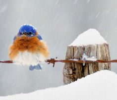 bird  |  vi.sualize.us