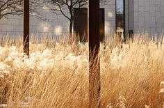 Plaza at BRFkredit Head Quarters by Henrik Jørgensen Landskab AS « Landscape Architecture Works | Landezine urban meadow grass