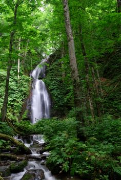loved walking the trails to see the waterfalls, lake towada