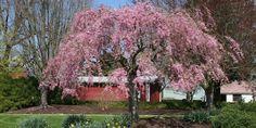 Est-ce que l'on peut utiliser le sulfate de magnésium sur les arbres ?