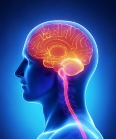 Today's blog post is about meningiomas, a common type of primary brain tumor, in observation of Brain Tumor Awareness Month during May.