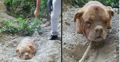 When this man was out walking his dog, he came across a mound of dirt. But what he found inside is chilling. God sent him there for a reason!