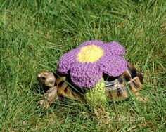 Nothing makes you feel good quite like a snazzy outfit. Katie Bradley's four tortoises are the best dressed in town, thanks to a wide assortment of crocheted cozies.
