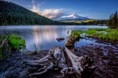 Mt Hood Trillium Decay_USA by Eamon Gallagher on 500px