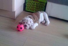Please throw my Ball.