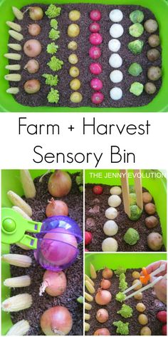 Farm Harvest Sensory Bin - Connect your kids to their food through sensory play! on The Jenny Evolution