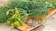 Kopr využijeme celý – lístky, květy i semena. Wooden Spoons, Tzatziki, Kraut, Natural Remedies, Ale, Seeds, Spices, Healthy, Insomnia